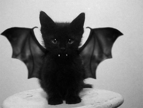 A vampire cat.